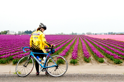 Biker looking at tulip fields