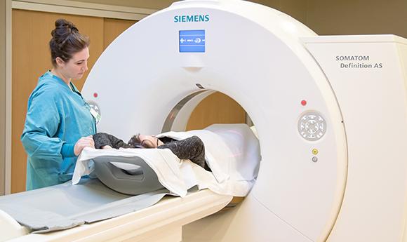 Trabajador de atención médica prepara al paciente para una MRI